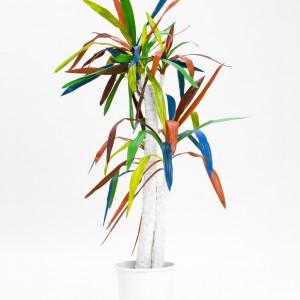 Object (Yucca) (2012) | Foto / diptych | 45 x 62 cm | Oplage: 10 + 2 AP | Zaida Oenema | Galerie Untitled | Beschikbaar