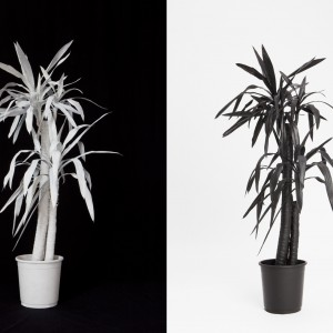 Object (Yucca) (2012) | Foto / diptych | 110 x 75 cm | Oplage: 10 + 2 AP | Zaida Oenema | Galerie Untitled | Beschikbaar