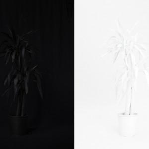 Object (Yucca) (2012) | Foto / diptych | 110 x 75 cm | Oplage: 10 + 2 AP| Zaida Oenema | Galerie Untitled | Beschikbaar