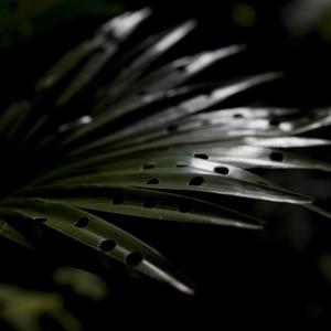Untitled (Plant) (2010) | 60 x 40 cm | Foto op glicee | Zaida Oenema | Galerie Untitled | Beschikbaar