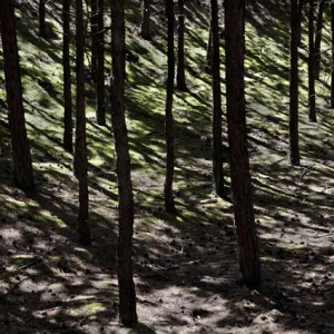 Bos (2012) | 157 x 232 cm | fine art papier op dibond met houten lijst | Oplage 9 + 2AP | Lenny Oosterwijk | Gallery Untitled