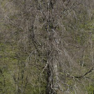 Saint Joire, Frankrijk (bos) | 112 x 77 cm | fine art papier op dibond met houten lijst | Oplage 9 + 2AP | Lenny Oosterwijk | Gallery Untitled
