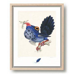 Raoul Deleo | Rhipidurana Caerulea | Oplage: 100 | Giclee print op Hahnemühle papier in houten lijst | 50 x 40 cm | Gallery Untitled