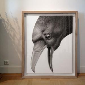Voorbeeld van inlijsting | Crow (2014) | 114 x 94 (incl. lijst) | Potlood en waterverf op papier in handgemaakte lijst | Origineel | Raoul Deleo | Gallery Untitled