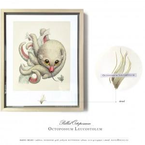 Voorbeeld van inlijsting | Octopossum Leucostolum (2015) | Print: 50 x 40 cm | Giclee print op Hahnemühle papier in houten lijst | Oplage 100 + 2AP) |  Raoul Deleo | Galerie Untitled