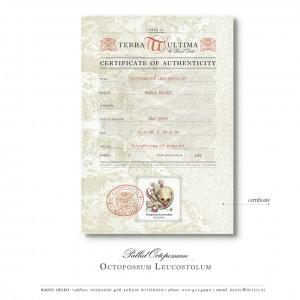 Voorbeeld van het echtheidscertificaat | Octopossum Leucostolum (2015) | Print: 50 x 40 cm | Giclee print op Hahnemühle papier in houten lijst | Oplage 100 + 2AP) |  Raoul Deleo | Galerie Untitled | Bij elk kunstwerk bijgevoegd