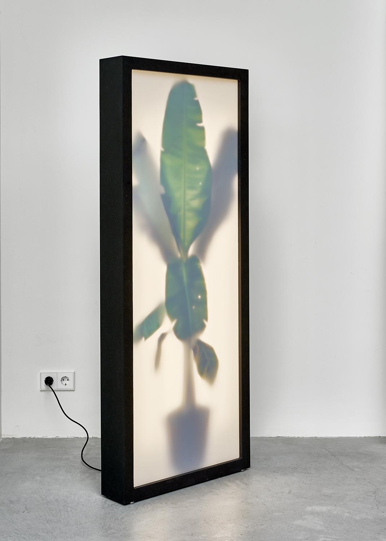 Growing Plants Indoor | 156 x 62,5 x 13,5 cm | Digitale print collage in lichtbox  (hout, plexiglas, LED-tl, digitale kleuren print) en  afstandbediening | Origineel | REM atelier | Galerie Untitled | Beschikbaar