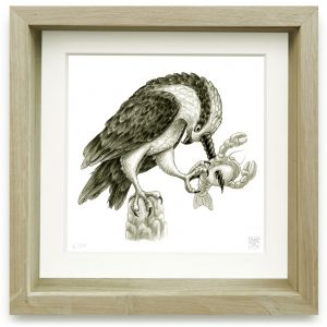 Harpyopsis Cornuperforans (2006) | 15 x 15 cm | Giclee print op Hahnemühle papier in handgemaakte houten lijst | Oplage 25 + 2AP | Raoul Deleo | Gallery Untitled