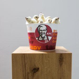 DIYKFC | 20 x 20 x 20 cm | KFC-bucket, opgezette kippenkuikens (serie van 3) | Jerry Hormone | Gallery Untitled