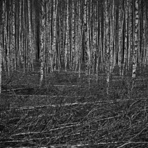 Treescape 19   Kaupo Kikkas   Gallery Untitled