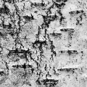 Treescape 29   Kaupo Kikkas   Gallery Untitled