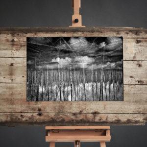 Treescape 18   Kaupo Kikkas   Gallery Untitled