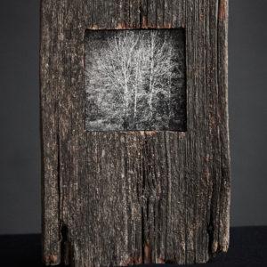 Treescape 10   Kaupo Kikkas   Gallery Untitled
