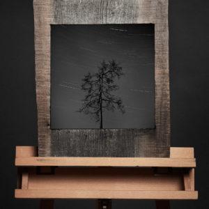 Treescape 6   Kaupo Kikkas   Gallery Untitled