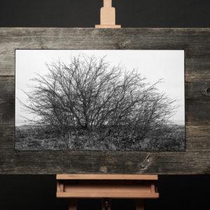 Treescape 2   Kaupo Kikkas   Gallery Untitled