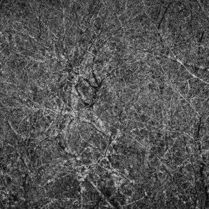 Treescape 27   Kaupo Kikkas   Gallery Untitled
