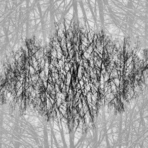 Treescape 24   Kaupo Kikkas   Gallery Untitled