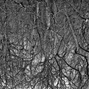 Treescape 23   Kaupo Kikkas   Gallery Untitled