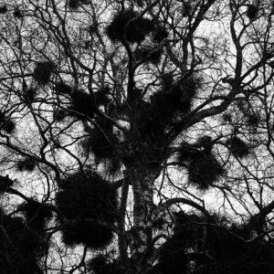 Treescape 20   Kaupo Kikkas   Gallery Untitled